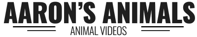 Aaron's Animals - I Make Videos with Animals